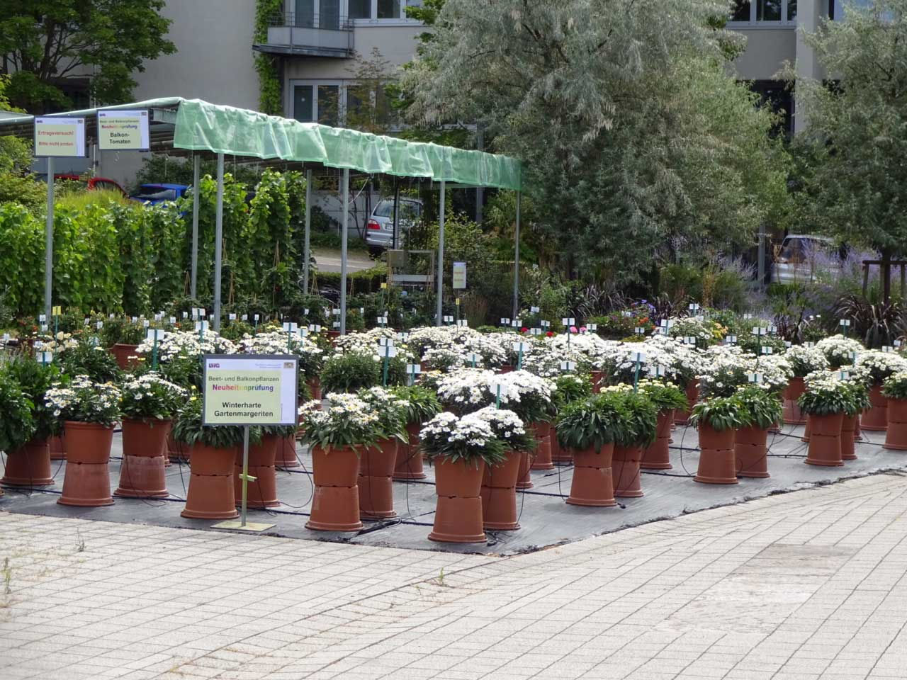 Bilder vom Beet- und Balkonpflanzentag